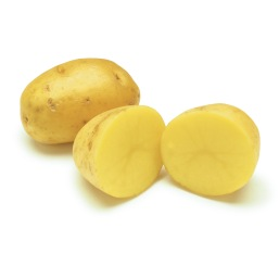 gold potato